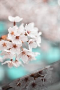 pink flowers in a hazy background. Pastel colors. reflection.