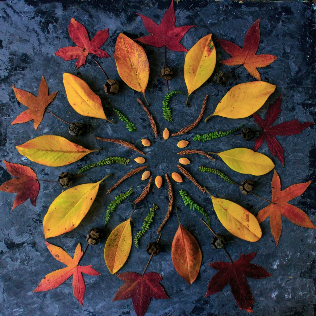 Autumn leaves in mandala shape flat lay on dark background. Natural meditative technic for calm down.