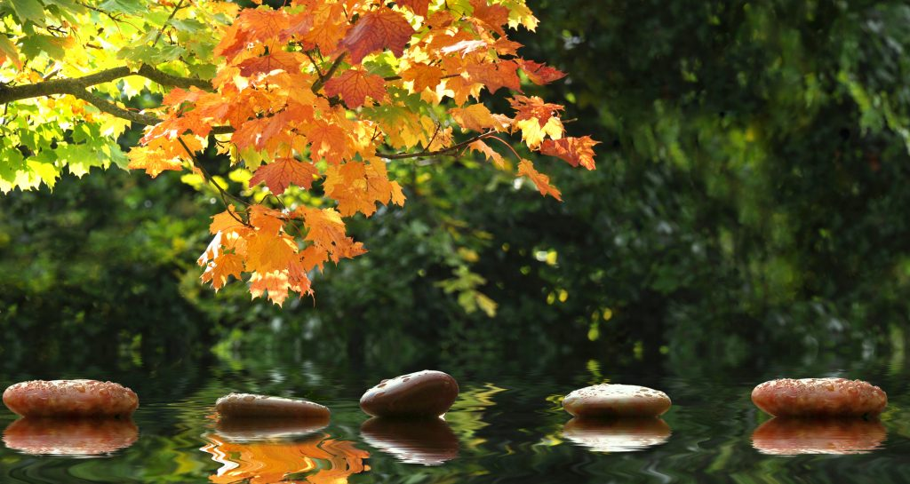 Sun shining on orange autumn leaves over water. There are smooth stones on top of the water. Maybe their stepping stones, maybe their just arranged in a neat row. The scene is calm and serene.