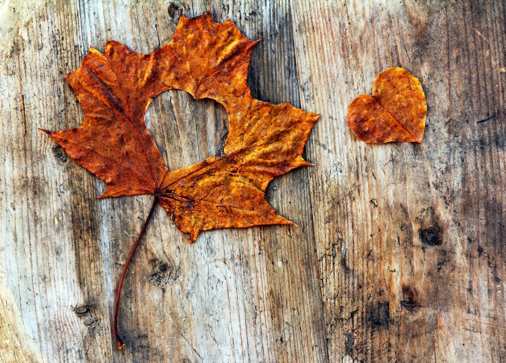 orange autumn leaf with heart shape cut out of it. Both the leaf and the cut out heart are on a wood grain background..