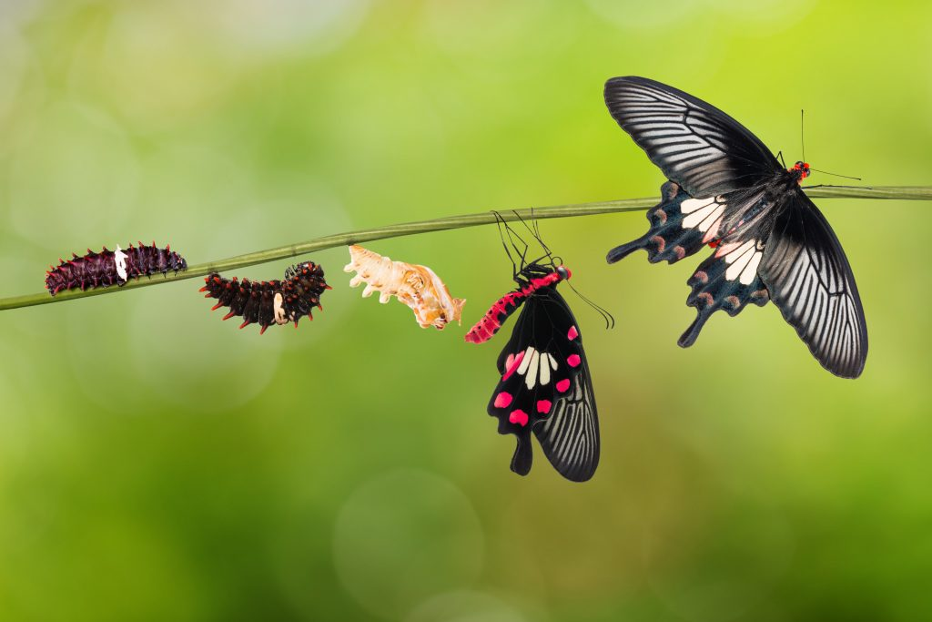 butterfly life cycle. The caterpillar starts on top of the twig then moves to the bottom where the chrysalis is formed then the Butterly moves to the top of the stem. gives the impression of transformation and movement.